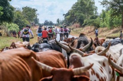 general cattle
